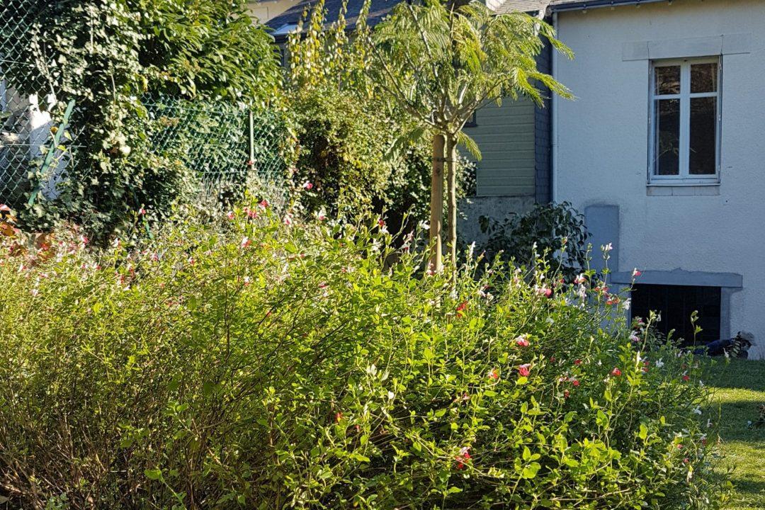jardin Camelias-D&B (1)